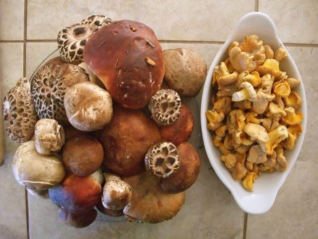 Copper Mountain wild mushrooms