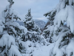 Heavy powder on trees at Copper Mountain