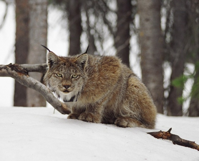 Your Guide To Spotting Some Cool Critters Near Copper Mountain