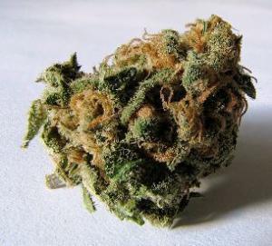Colorado marijuana laws at ski areas
