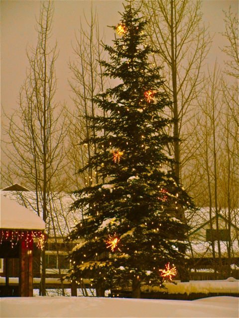 Frisco town christmas tree
